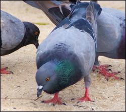 bird-removal
